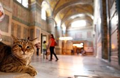 The Guardian Cat Of The Hadia Sophia Museum, Istanbul, Turkey Istanbul Hotels, Istanbul Travel, Istanbul Guide, Hagia Sophia Istanbul, Turkish Lessons, Learn Turkish, Turkish Language, Cat People, The Guardian