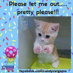 #tgif #candycat #cat