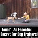 """""""Touch"""" – An Essential Secret For Dog Trainers!"""