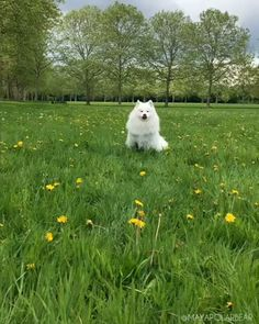 Maya Polar Bear hopes you have a great day! Cute Funny Animals, Cute Baby Animals, Funny Dogs, Animals And Pets, Cute Gif, Funny Cute, Cute Puppies, Cute Dogs, Maya