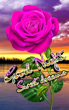 Good Night I Love You, Good Night Sweet Dreams, Good Night Image, Good Morning Roses, Good Morning Good Night, Family Quotes, Sayings, Friends, Floral