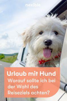 Worauf sollte ich bei der Wahl des Reiseziels achten? Wenn man mit dem Hund verreist gibt es einiges zu beachten. Wir haben tolle Tipps für dich! Urlaub mit dem Hund. #hund #urlaubmithund Am Meer, Roadtrip, Dogs, Animals, Tourism, Adventure, Amazing, Animales, Animaux