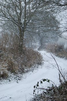 Walk down a snowy road