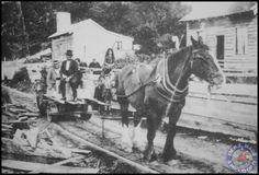 Sawmilling family on Stewart Island