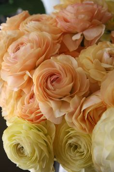 Peaches & Creams • Ranunculus