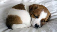 ptittes betes の 6 datos para saber antes de ser dueño de un cachorro perrito chiot chien - cute - Perros Cute Animal Videos, Cute Animal Pictures, Puppy Pictures, Cute Dogs And Puppies, I Love Dogs, Doggies, Adorable Puppies, Lab Puppies, Cute Animals Puppies