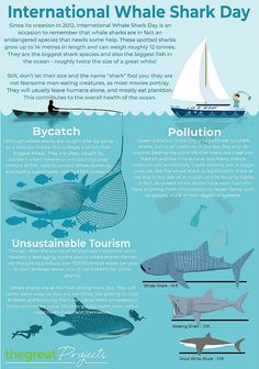 Shark Conservation, Energy Conservation, Big Shark, Save Our Oceans, Marine Fish, Animal Facts, Marine Biology, Ocean Themes, Koh Tao
