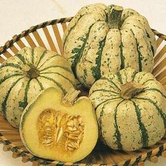 squash sweet dumpling - spread 3 ft - no need to cure - keeps 4 months