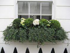 ivy window box.