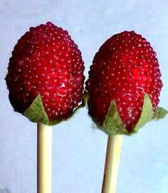 Raspberry knitting needles