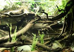 Rommer Talens South American River Biotope