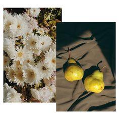 L'été indien, c'est la meilleure saison. Ses couleurs, ses saveurs... on est fan. — #moodboard #moodoftheday #moodday #mondays #socialmedia #photography #humeur #contentcreation #images #visual #socialmedia Mood Of The Day, Dandelion, Table Settings, Creations, Images, Pumpkin, Autumn, Halloween, Flowers