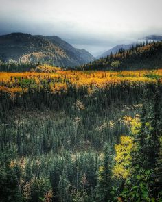 In Denali National Park Autumn comes a little earlier than most places but arriving in time to witness views like this makes the trip real worth it. : @trailbot