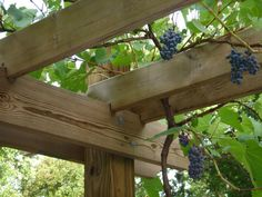 Here's a nice close look at the construction at the top of the arbor.  Perfect for growing grapes.