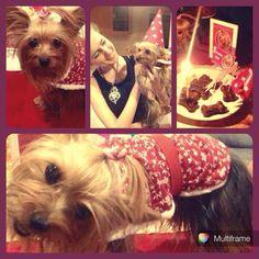 Mimi #pawty #barkday #pupcake #puppyparty #dogparty #yorkshire www.ninamaria.pt facebook.com/byninamaria