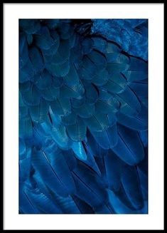 Deep blue feathers Poster in the group Prints / Sizes / 50x70cm | 20x28 at Desenio AB (3538)