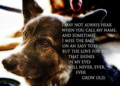 For our elderly dogs with lots of love!!  This looks so much like our Heidi!