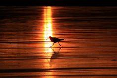 Walking on Sun - Awapuni, Gisborne Region, New Zealand Photo by Emanuele Del Bufalo