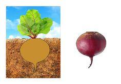 "Дидактична гра ""Що росте на городі"" Kids Schedule, Pear, Vegetables, Food, Cards, Essen, Vegetable Recipes, Meals, Maps"