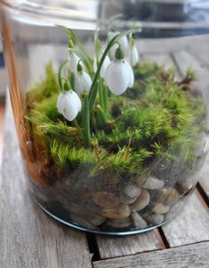 Snowdrop terrarium via Studio G blog. Is it possible to have plant many bulbs/ seeds to keep the display changing while not planting more?