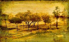 Trees along the savanna