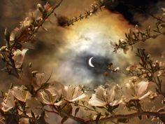 Gypsy Moon's Enchanted Chronicles