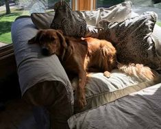 pet-friendly-chair-slipcover