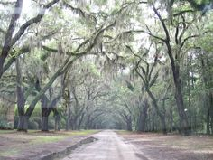 Wormsloe Plantation, Savannah Georgia   -This was such a beautiful place to see-