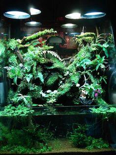 Aqua terrarium shop PLANTSTON plants ton