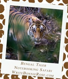 Notebooking Safari-India and the Bengal Tiger Part One. Our next stop in our notebooking safari across Asia takes us to the regions of West Bengal and Orissa in India.