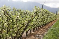 Day Tours, Vineyard, Plants, Outdoor, Outdoors, Vine Yard, Vineyard Vines, Plant, Outdoor Games