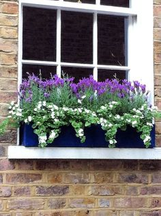 lovely purple & white window box .