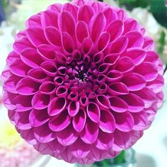 Pink Burst! #prettylook #designer #couture #summer #nature #flower #colors #beauty #goodness #inspiration #love #seasons #pink #amateur #photography #picoftheday #instagood #flowerpower