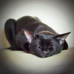 When my cat was a kitten, her face looked just like a fruit bat... I named her after Stellaluna.