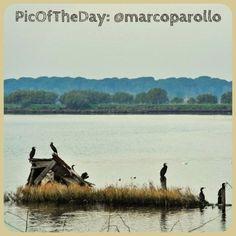 #PicOfTheDay #turismoer: Parco del Delta del Po, Cormorani - Complimenti e grazie a @marcoparollo