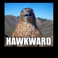 Get your pet products for up to 50% off at Petmountain.com!!! #Petm funny animal meme I hawk meme I bird meme I cheapest pet products