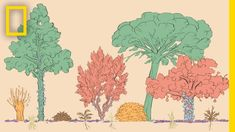 Martin Crawford's forest garden is abundant, diverse, edible, and might be one answer to the future of food systems. Source: A forest garden with 500 edible plants could lead to a sustainable future Edible Plants, Edible Garden, Natural Ecosystem, Perennial Vegetables, Tree Canopy, Growing Roses, Forest Garden, Natural Garden, Annual Plants