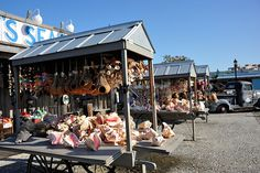 Thousands of Queen Conch shells. Key West Florida, Florida Keys, Conch Shells, Fl Keys, Im Coming Home, Indian Village, Sand Dollars, Cocoa Beach, Vintage Florida