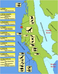 Dinosaurs known from the western Pacific coast of Laramidia.  The Sucia Island fossil site is 3 (highlighted in red).