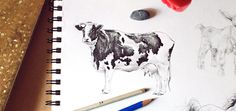 Learn how to draw animals on Craftsy