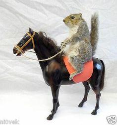 Taxidermy: Wild Grey Squirrel on a Horse | eBay