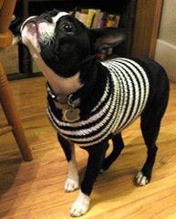 Ravelry: Boston Terrier-Sized Sweater pattern by Aimee Marsh