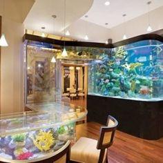 dream fish tank - Google Search