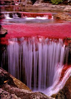 """Caño Cristales is also known as """"the river of five colors,"""" and it's considered to be the most beautiful river in the world. During Colombia's wet season, the water flows fast and deep, obscuring the bottom of the river and. Places Around The World, The Places Youll Go, Places To See, Around The Worlds, What A Wonderful World, Beautiful World, Beautiful Places, Amazing Places, Amazing Photos"""