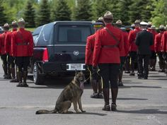 5 Incredibly Devoted Dogs Who Mourned The Deaths Of Their Owners