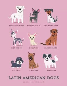 Latin American Dogs: Dogo Argentino, Xoloitzcuintle, Fox Paulistina, Inca Orchid, Chihuahua, Fila Brasileiro, Havanese, Cimarron, and Mucuchies