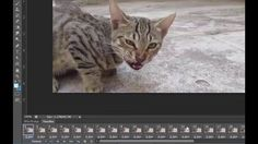 GIF animation in Adobe Photoshop : Learn how to make a GIF from video in Photoshop Few easy steps to convert video file into GIF image file, Photoshop tu.