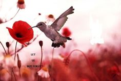 Today is Remembrance Day. Last week at my work we had our annual Remembrance Day ceremony. Every year this ceremony never fails to bring me. Red Poppies, Red Flowers, Flowers Nature, Pretty Flowers, Sunflowers, Champs, Canvas Wall Art, Wall Art Prints, Remembrance Poppy