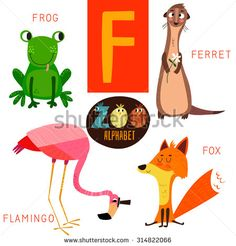 Cute zoo alphabet in vector.F letter. Funny cartoon animals: Frog,ferret,flamingo,fox . Alphabet design in a colorful style.