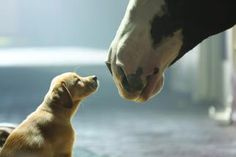 Budweiser Pulls Puppies From Super Bowl Ad Plans